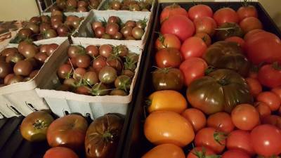Preserving the Abundance - Tomatoes